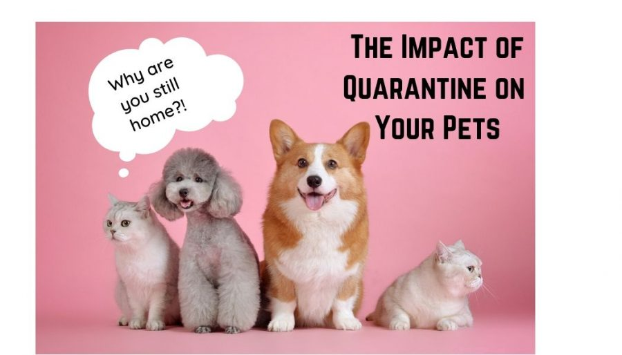 The Impact of Quarantine on Pets