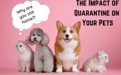 TheImpact of Quarantine on Pets